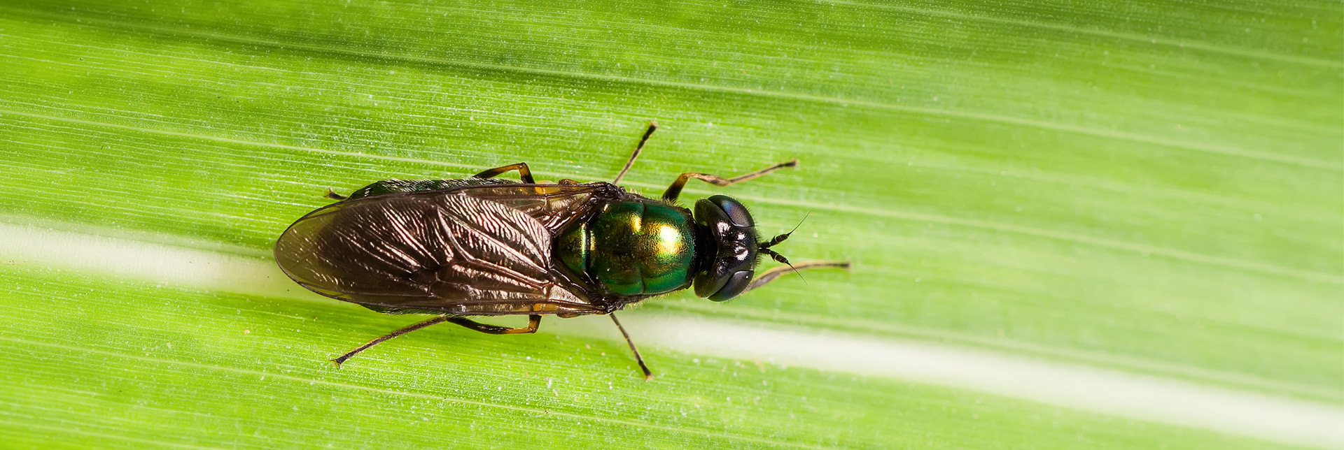 How Flies Make Farming More Sustainable