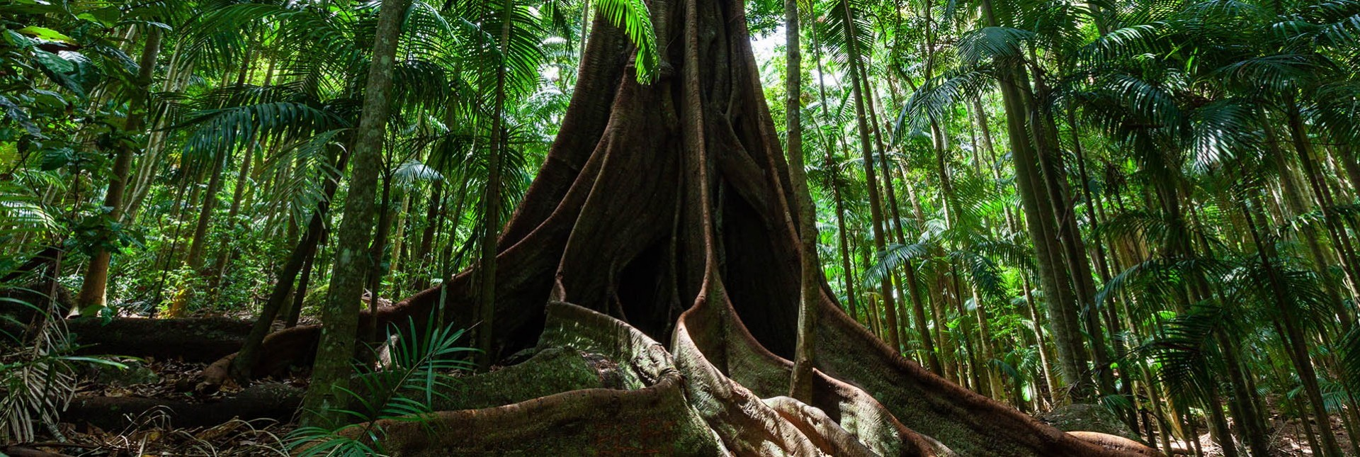 How Fig Trees Restore Forests and Biodiversity