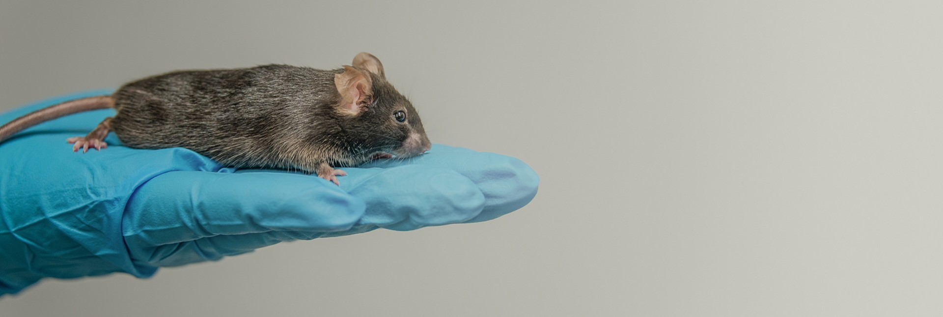Animal Testing in Food Research | Ask the Expert