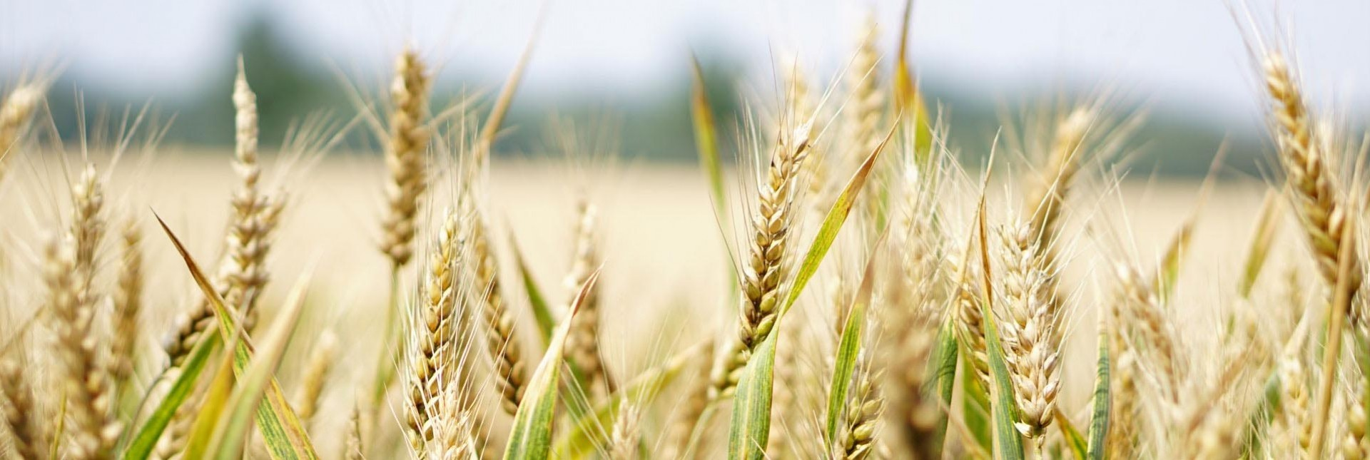 The Great Debate: Yes GMO or No GMO
