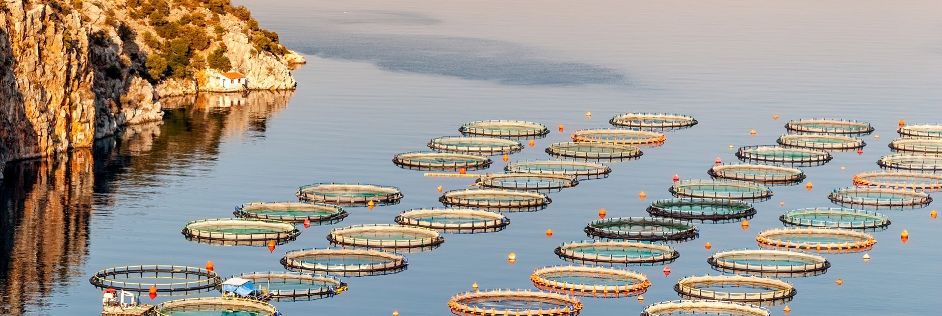 Farmed Fish | The ASC Certification Label | Buying Sustainable Aquaculture