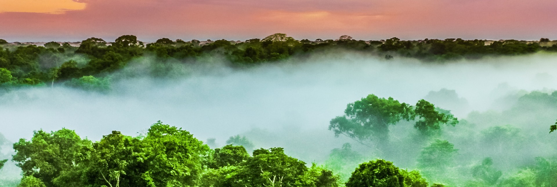 The Impact of Deforestation on Brazil Nuts