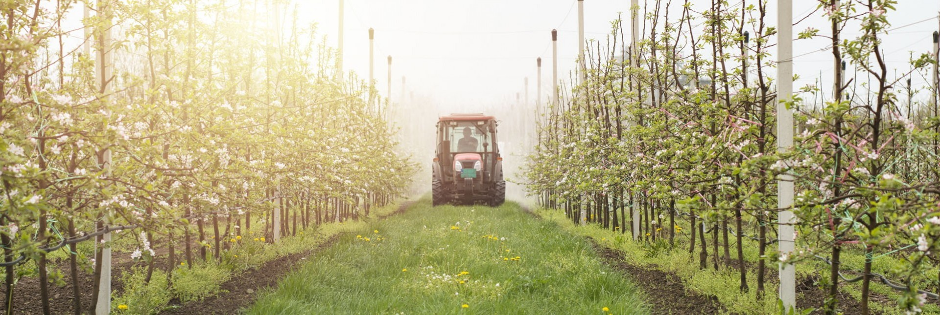 Environmental Impacts: Organic vs Non-Organic Pesticides