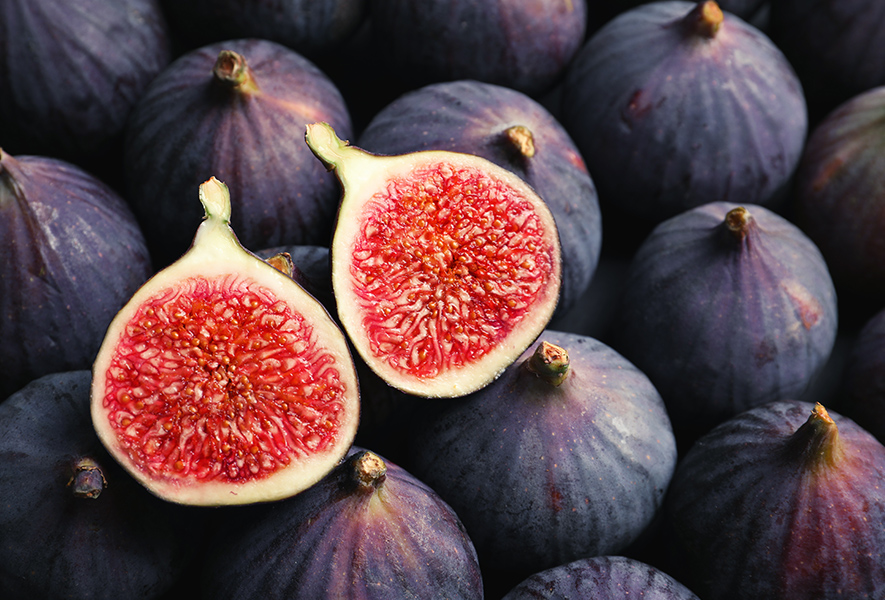Figs & Wasps | How Plant and Pollinator Work Together