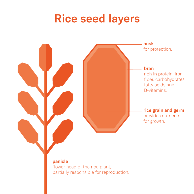 Rice in Asia | How it's Grown | FoodUnfolded