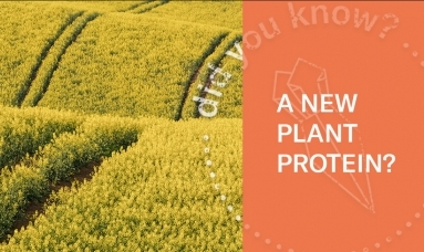 Rapeseed Protein | A Sustainable Source Of Plant Protein (360 Video)