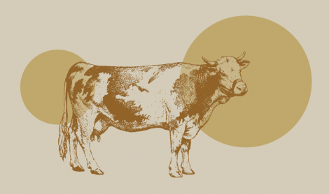5 Ways To Lower Cattle Methane Emissions