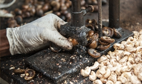 Cashew Nuts: The Hidden Cost of Production