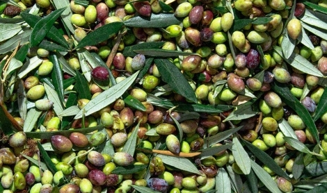 Reusing Olive Waste | Ask the Expert