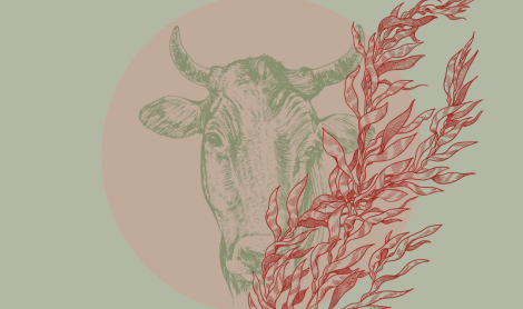 How to Reduce Methane Emissions | Could Seaweed Animal Feed Be The Answer?