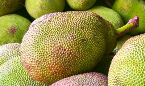 Jackfruit | How It's Grown