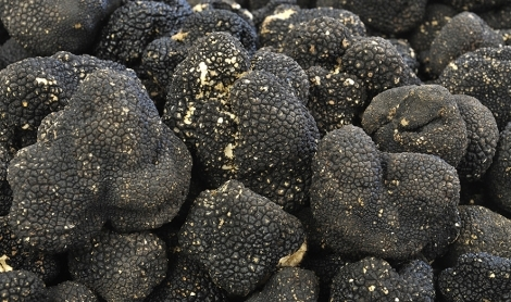 How Truffles Are Grown