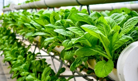 Urban Farming | Grow Your Own Food