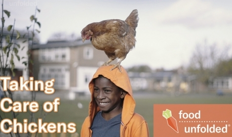 City Chicks | Keeping Chickens In Cities