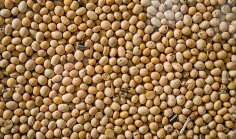 Is Soy Bad for the Environment?