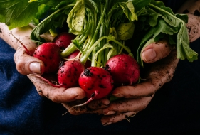 What Is Organic Food | Is it really chemical-free?