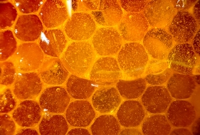 Using Honey as a Medicine