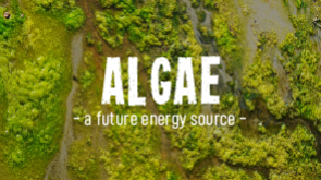 Algae – A future energy source