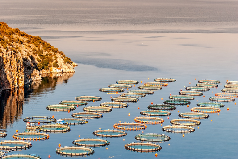 Fish Farming | Opinion On Aquaculture